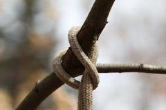 Rope knot. Close-up shot royalty free illustration