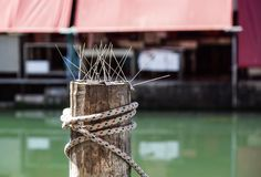 Rope knot for securing a boat moored at a harbor. Rope knot for securing a boat moored at a harbor Royalty Free Stock Photography