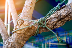 Rope knot on tree as a strong nautical marine line tied together Royalty Free Stock Photography
