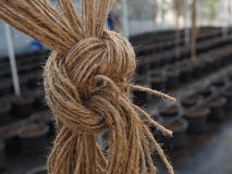 Rope with knot. Stock Image