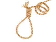 Rope knotted in noose Stock Photos