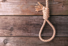 Rope knotted in noose Stock Photography
