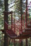 Rope la traccia negli alberi/corde scorrono negli alberi Fotografia Stock