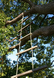 Rope Ladder. Child's rope ladder suspended from a large tree branch royalty free stock images