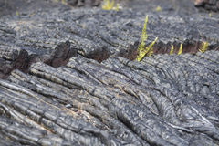 Rope Lava with Crack Royalty Free Stock Photo