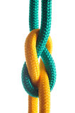 Rope with marine knot on white background. Royalty Free Stock Images