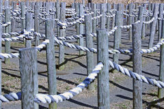 Rope Maze. A maze made from rope in the country stock photo