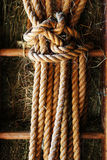 Rope on old the wooden ladder. Country background Stock Image