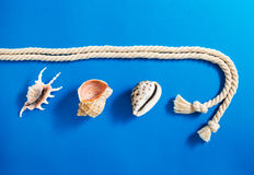 Rope with set of various sea shells Stock Image