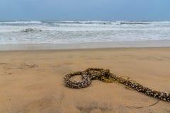 Rope and shellfish Royalty Free Stock Image