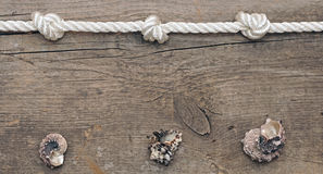 Rope and shells Stock Photo