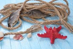 Rope shells starfish, dried fish Stock Photos