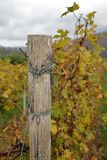 Rope support pole of an autumn vineyard. A rope support pole of an autumn vineyard Royalty Free Stock Photo
