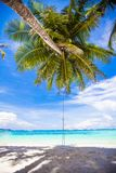 Rope swing on big palm tree at white sandy beach Stock Photography