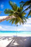 Rope swing on big palm tree at white sandy beach Stock Images