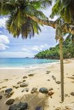Rope swing on a palm on seychelles beach. A rope swing on a palm on seychelles beach with turquoise water and golden sand Stock Image