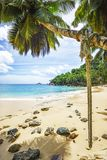Rope swing on a palm and stones in white sand at tropical beach. A rope swing on a palm tree on seychelles beach with turquoise water and stones in the golden Stock Photography
