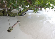 Rope swing from tree by the sea Royalty Free Stock Photos