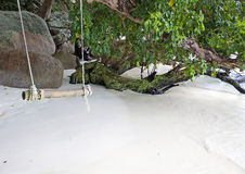 Rope swing from tree by the sea Stock Image