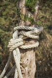 Rope tied to a tree Royalty Free Stock Photography