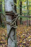 Rope in a tree Royalty Free Stock Images