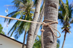 Rope with tropical palm tree in Philippines. Rope with tropical palm tree Royalty Free Stock Photography
