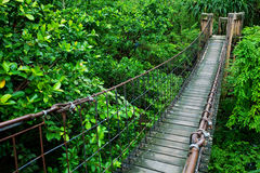 Rope walkway. Through the treetops in a rain forest Royalty Free Stock Photos