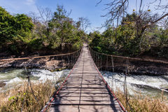 Rope walkway through the river in a rain forest Stock Image