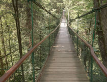 Rope walkway through the treetops in a rain forest Stock Photos
