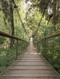 Rope walkway through the treetops in a rain forest Stock Image