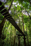 Rope walkway through the treetops in a rain forest Royalty Free Stock Photography