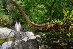 Rope and Wire suspended hanging bridge across a Jungle River in El Eden by Puerto Vallarta Mexico where movies have been filmed. In America stock photo