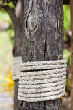 Rope and wood Stock Image