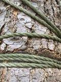 Rope choking tree. Rope wrapped around tree strangling royalty free stock photo
