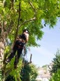 Roped aan een boom Stock Foto's