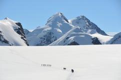 Roped party on Breithorn Glacier, Zermatt, Switzerland Royalty Free Stock Photos