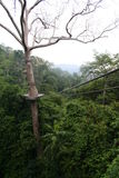 The ropeway. In the rainforest of Thailand Stock Images