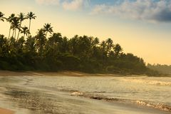 Ropical beach with palm trees. Beautiful tropical beach with palm trees in the morning Royalty Free Stock Photography