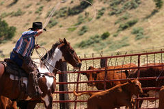 Ropin Stock Images