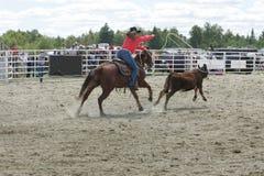 roping ταύρος Στοκ εικόνες με δικαίωμα ελεύθερης χρήσης