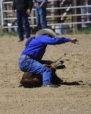 Roping the Calf. Cowboy roping calf at a rodeo Royalty Free Stock Photography