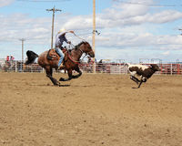 Roping calves at the rodeo. Cowboy roping calf at rodeo Royalty Free Stock Image