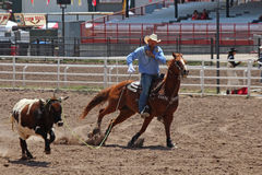 Roping - Cheyenne Frontier Days Rodeo 2013 Stock Image