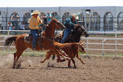 Roping - Cheyenne Frontier Days Rodeo 2013 Stock Images