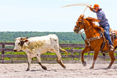 Roping Competition Stock Image