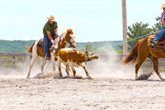 Roping Competition Stock Photo