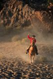 Roping Cowboy royalty free stock photography