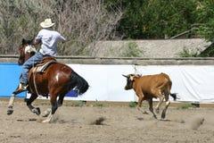 Roping da vitela Imagens de Stock