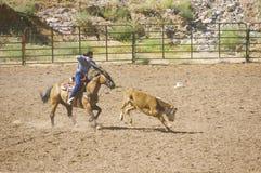 Roping da vitela Imagem de Stock