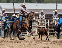 Roping da vitela fotografia de stock royalty free